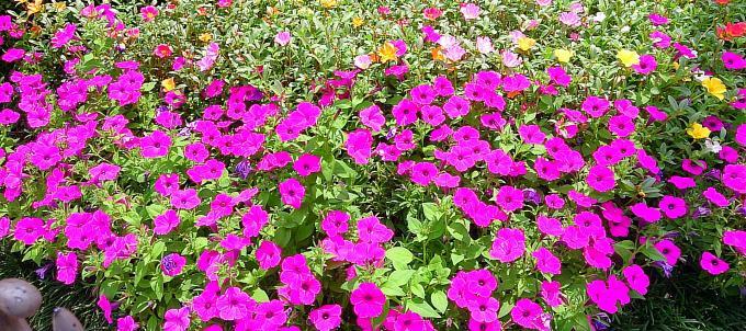 FLOWER_20140723