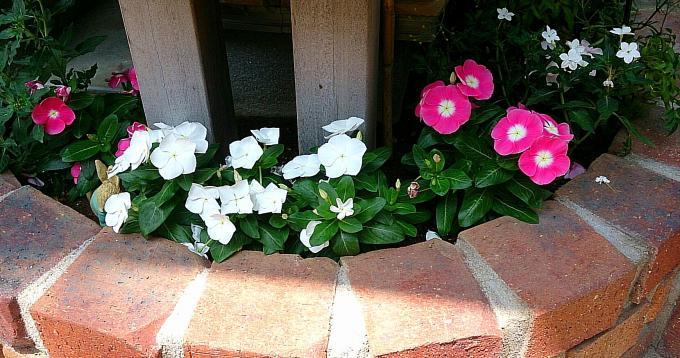 FLOWER_20140725