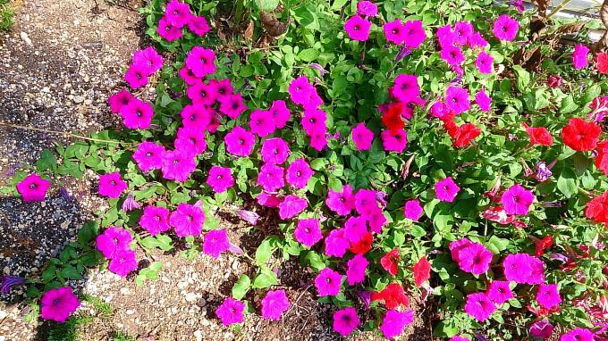 FLOWER_20140726