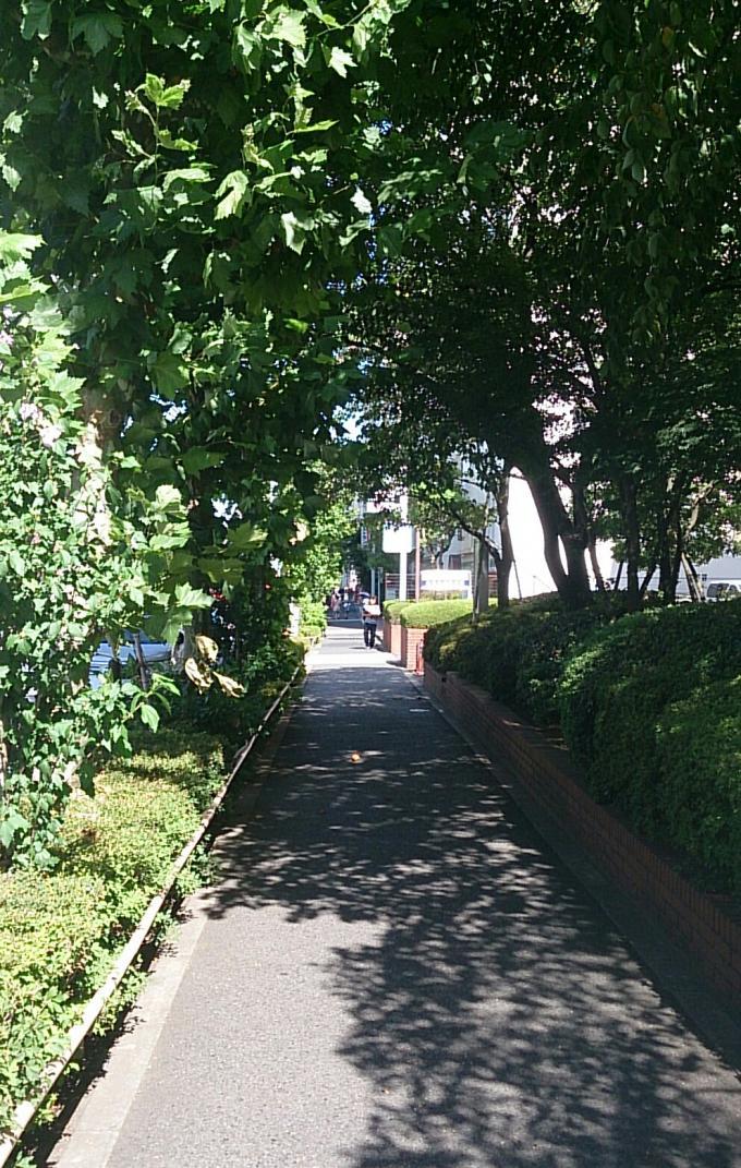 街路樹_20140803