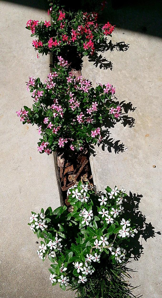 FLOWER_20140806