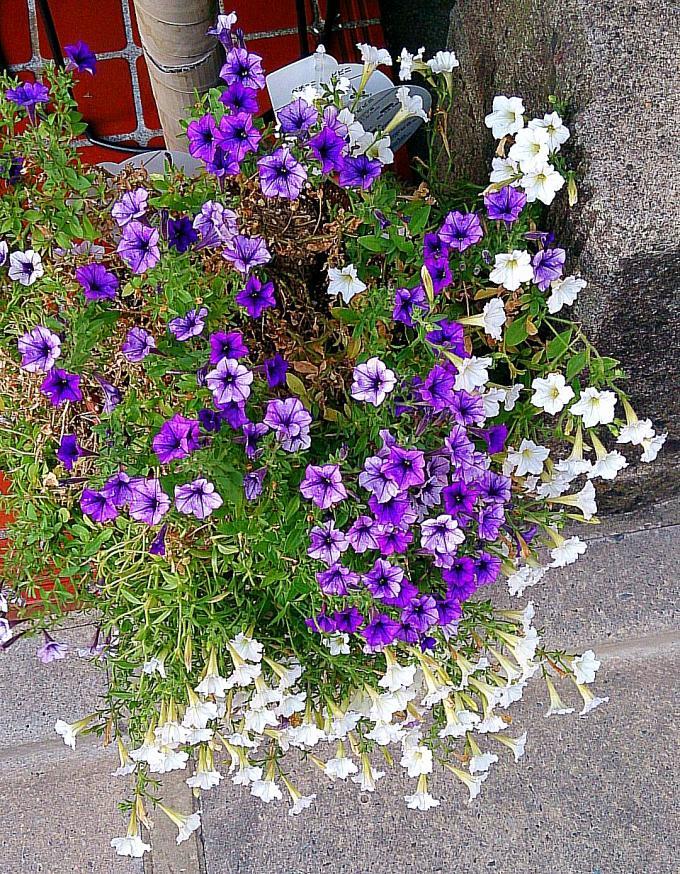 FLOWER_20140807