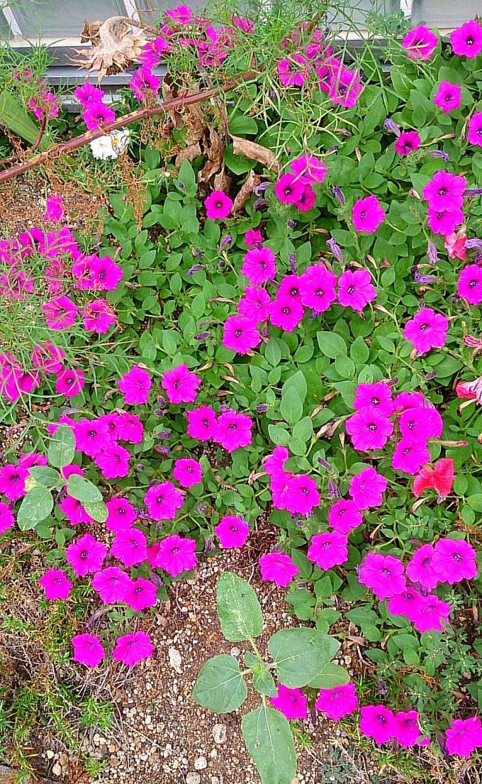 FLOWER_20140808