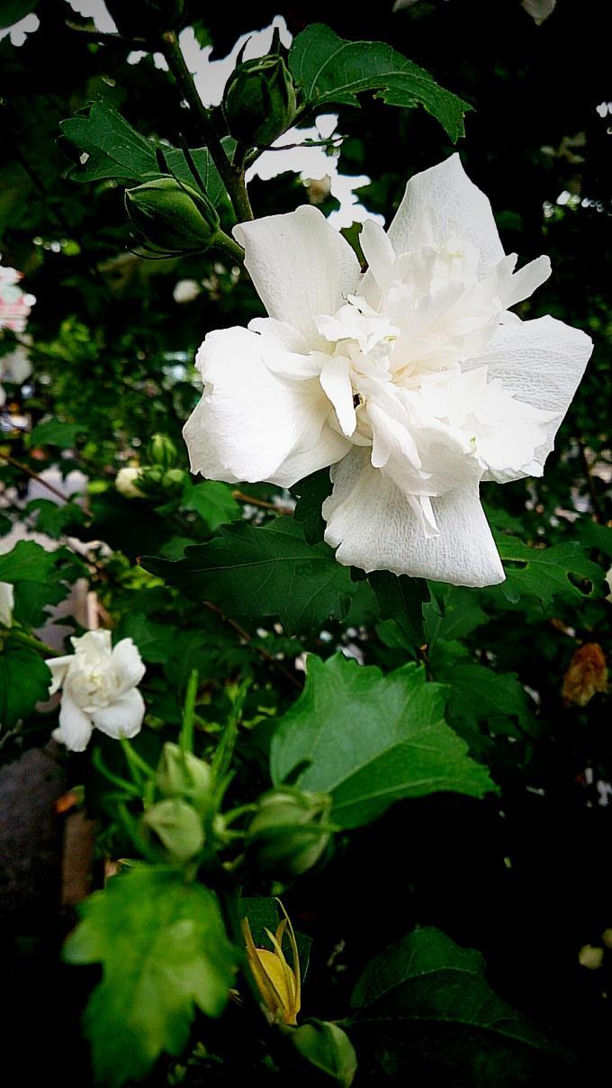 FLOWER_20140812