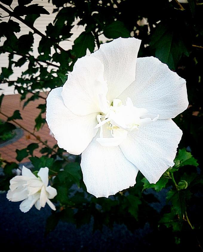 FLOWER_20140819