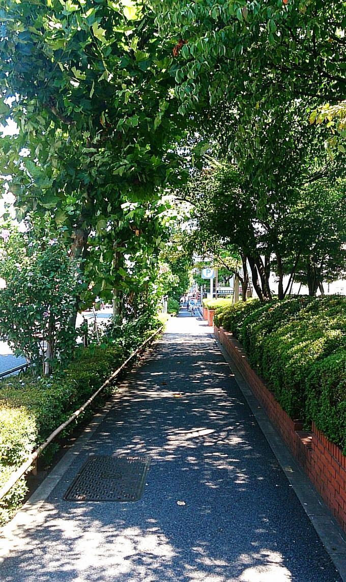 街路樹の木漏れ日_20140819