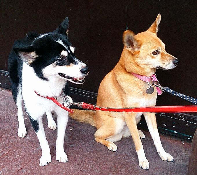 DOGS_20140823