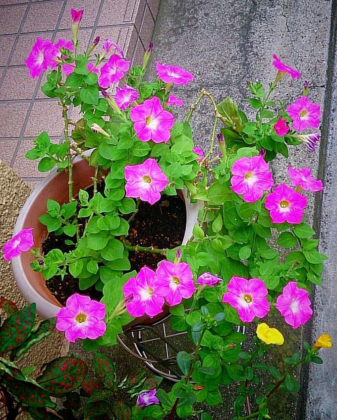 FLOWER_20140826