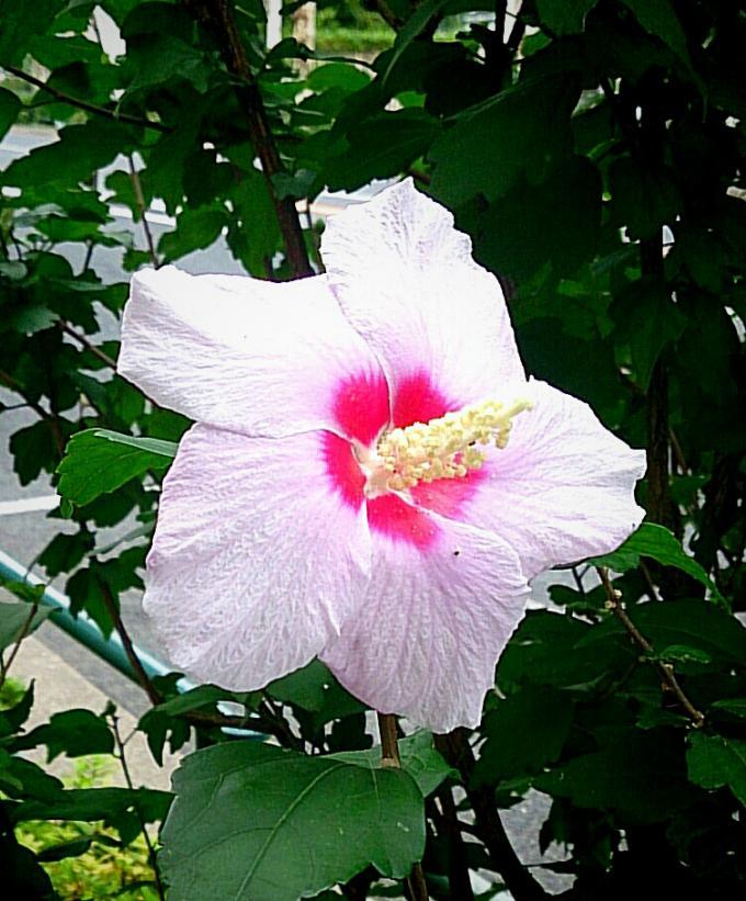 FLOWER_20140829