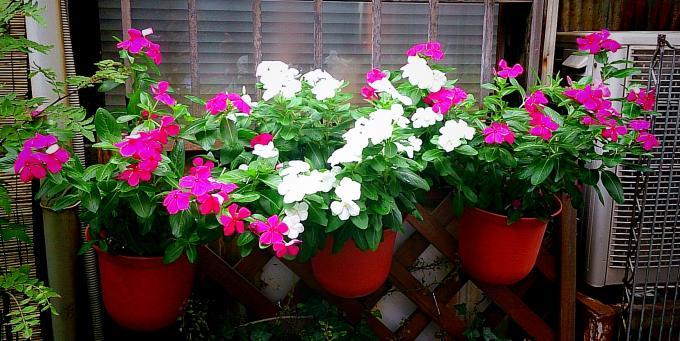 FLOWER_20140830