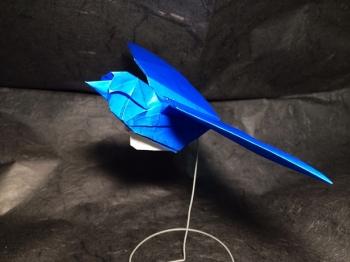 飛ぶ小鳥1