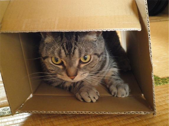 箱が好き1