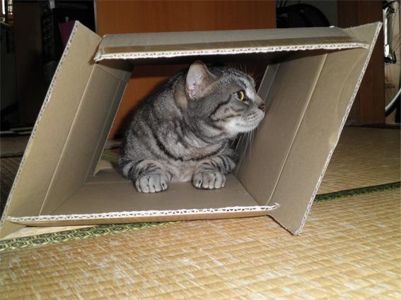 箱が好き2
