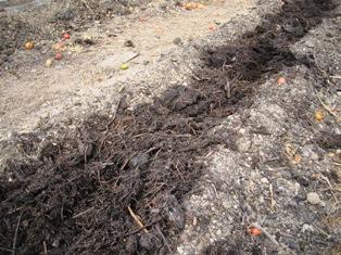 枯れ草堆肥