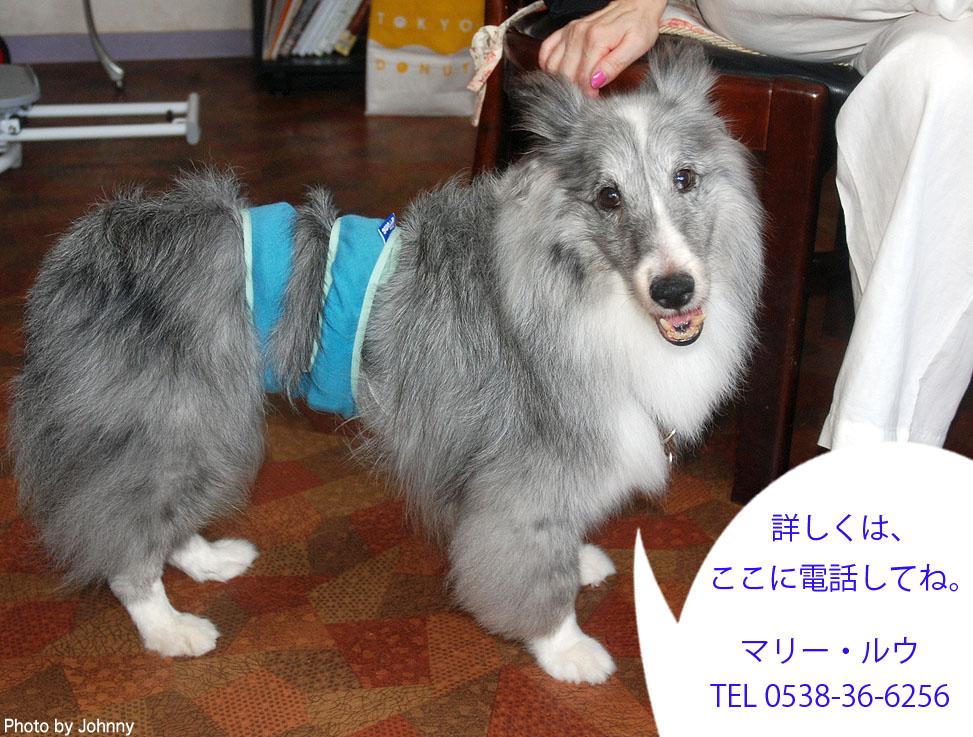 Photo2014_0726_10.jpg