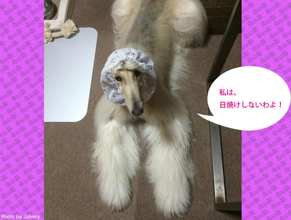 Photo2014_0810_01.jpg