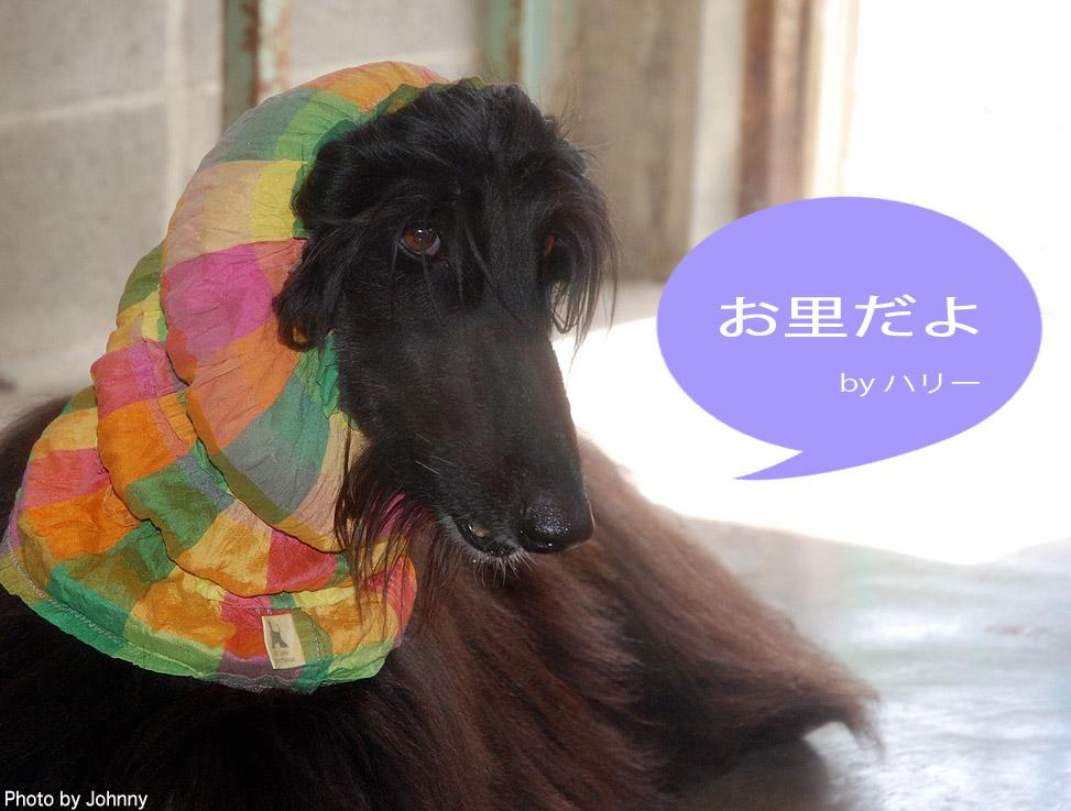 Photo2014_0831_01.jpg
