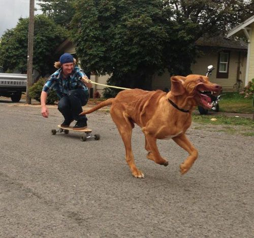 dog-companions-37.jpg
