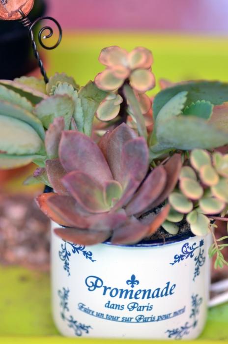 多肉植物12
