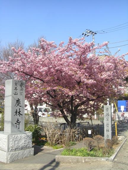 20140323江戸川 (1)