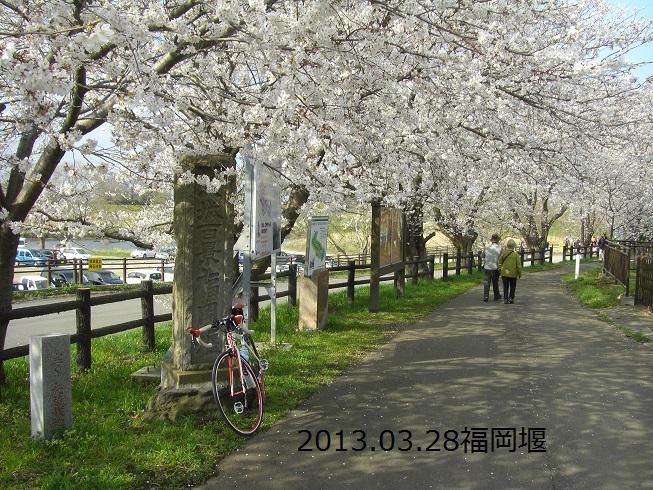 20130328福岡堰 桜