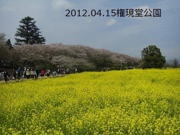 20120415権現堂の桜