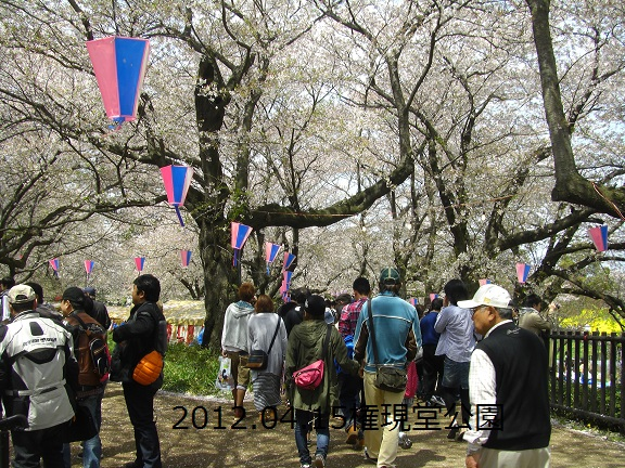 20120415権現堂の桜2