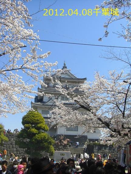 20120408千葉城の桜