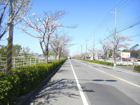 20140405関宿城と権現堂公園 (2)