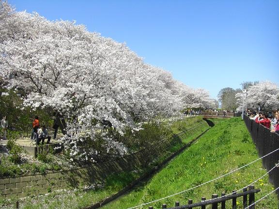 20140405関宿城と権現堂公園 (7)