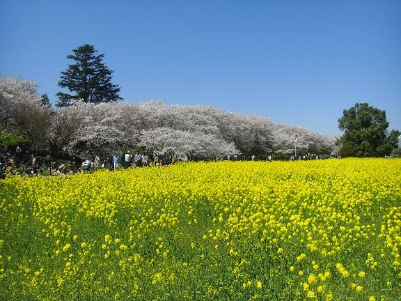 20140405関宿城と権現堂公園 (8)