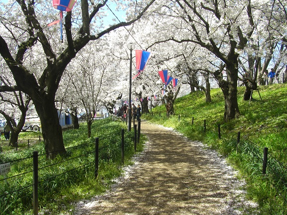 20140405関宿城と権現堂公園 (9)