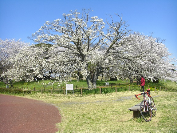 20140405関宿城と権現堂公園 (18)