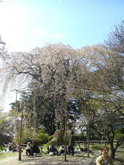 20140405関宿城と権現堂公園 (23)