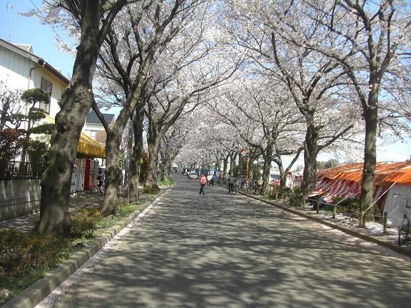 20140405関宿城と権現堂公園 (25)