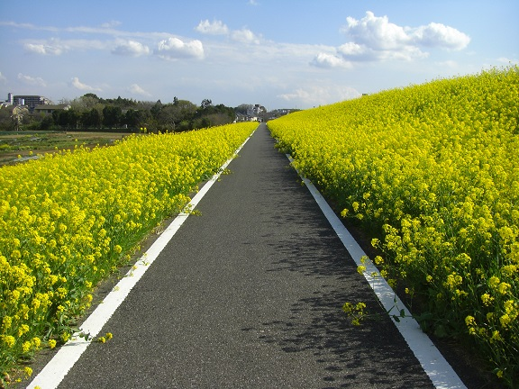 20140405関宿城と権現堂公園 (30)