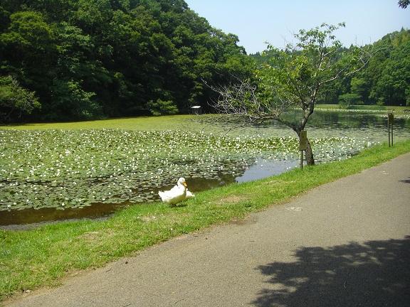 20140531昭和の森他 (16)