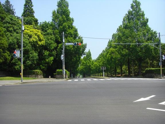20140531昭和の森2  (5)