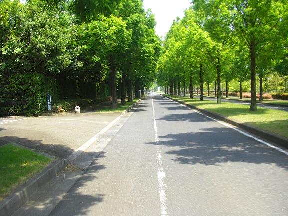 20140531昭和の森2  (6)