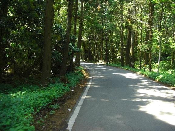 20140531昭和の森2  (10)