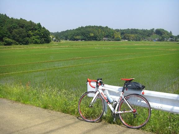 20140531昭和の森2  (11)