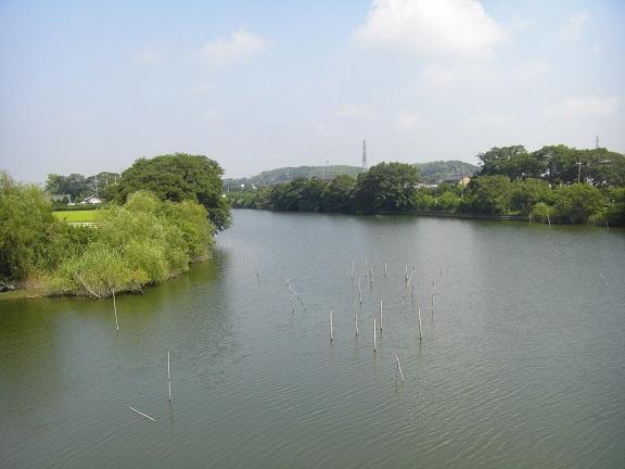 20140726印旛沼 (3)