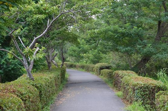 20140727手賀沼おさんぽ (7)
