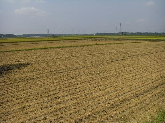20140906印旛沼 (7)