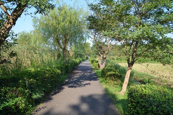 20140914手賀沼お散歩 (2)