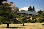 2014_04_15富士霊園 さくらさくら
