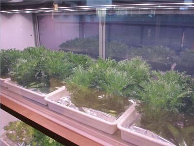 自家栽培2 |京都・滋賀リフォームするならフジ・ホーム