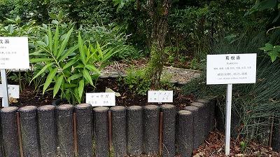 20140812京都薬用植物園01