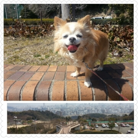 3月16日晴れの公園