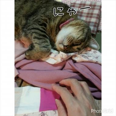 PhotoGrid_1406167770270.jpg